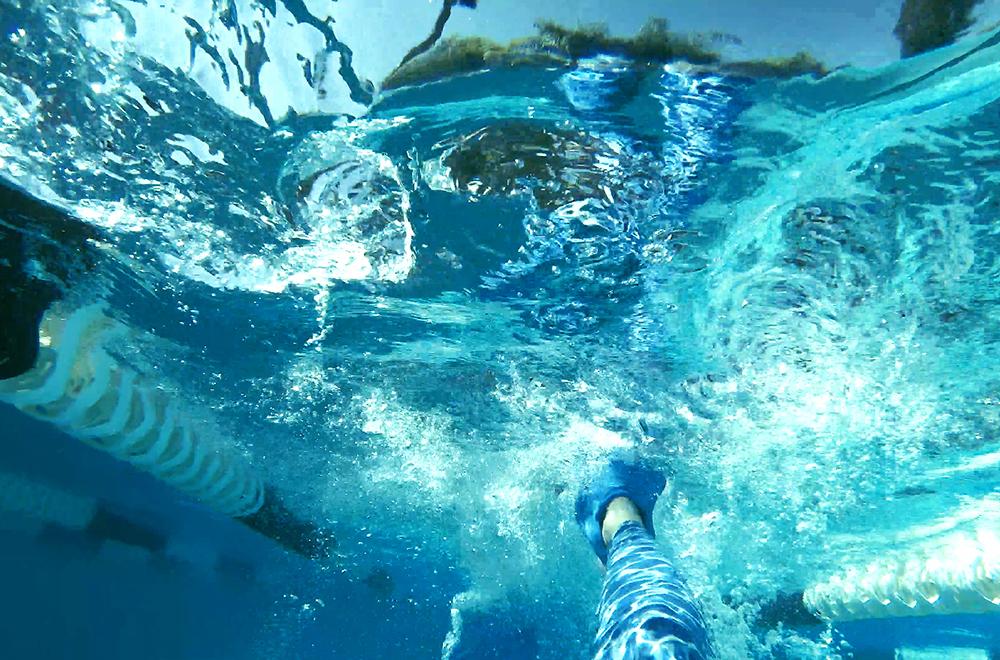 https://www.ellaryeddy.com/?s=dolphin